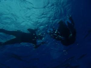 海でも飛び込んで