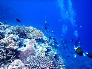 ダイビングより何より広島カープ、西表島。