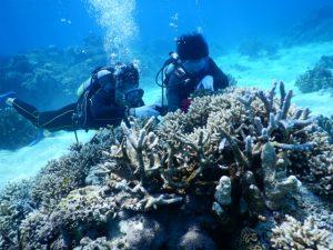西表島で体験ダイビングを