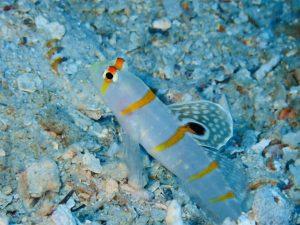 水中のかわいい魚たち